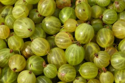 Karusmari ´Hinninmäen Keltainen´ (Grossularia)