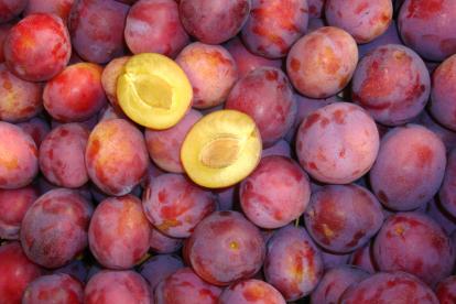 Ploom Sonora´ (Prunus)