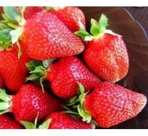 Aedmaasikas ´Asia´ (Fragaria ananassa)